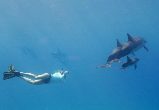 Eva photographing Spinner dolphins. Photo: Shelly Feduniw